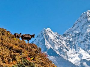 Everest View Luxury Trek -10 Days