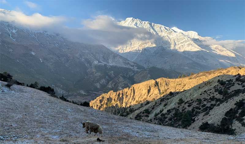 Annapurna Circuit and Tilicho Lake Trekking