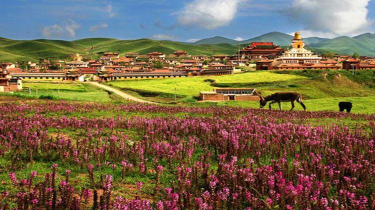Tibet Shangri la Tour